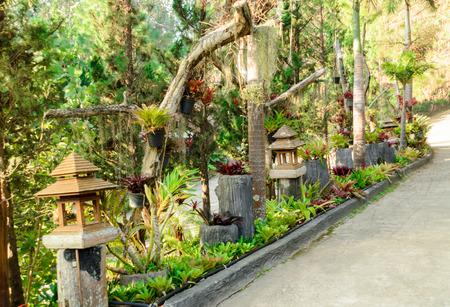 bromeliad: Bromeliad and plant in gardening design ideas Stock Photo