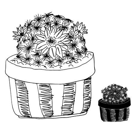 describe: Hand drawn cactus on a flowerpot on white background,outline doodle cactus,cactus sketch illustration