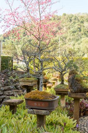 humidity: bonsai tree humidity tray in outdoor garden