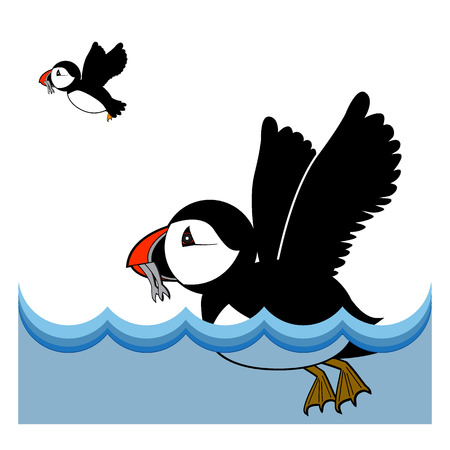 seabird: Puffin vector illustration on white background