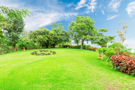greenery lawn with trees in outdoor garden