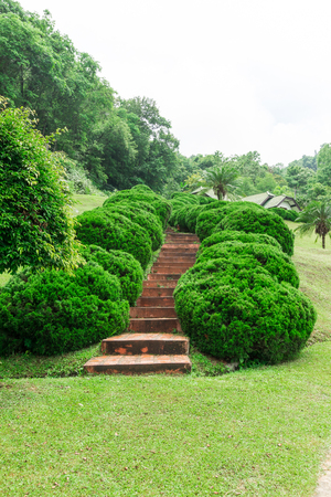 greenery: Pathway among greenery lawn with ornamental trees in outdoor garden
