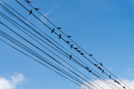 Birds catch on cable