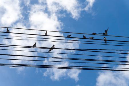 atrapar: Las aves atrapan en el cable