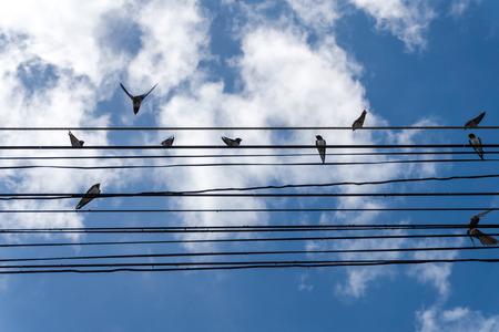by catch: Las aves atrapan en el cable