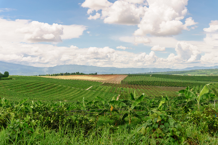 agricultural area: The agricultural area of farm field on hill in Thailand