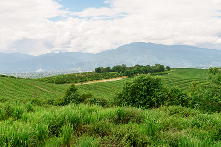 The agricultural area of farm field on hill in Thailand