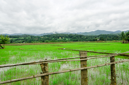 country life: country life of Thai on rice field
