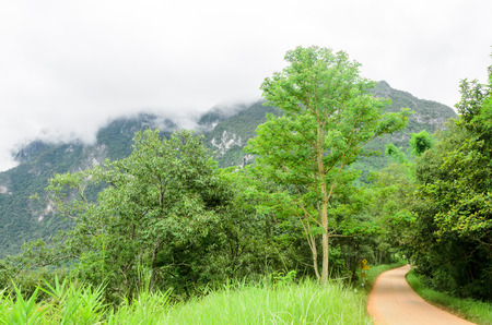 clay stone road in jungle: Road curve concrete among tree in the forest Stock Photo