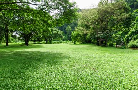 Groen gras landschap met boom schaduw in het park