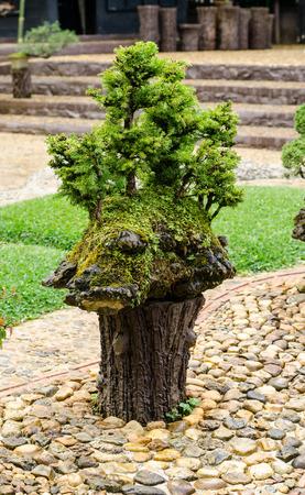 Bonsai tree in outdoor garden