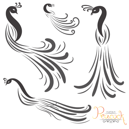 vector illustration of peacock and peacock feather isolated on white