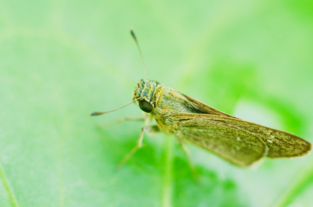 insect on green grass Stock Photo