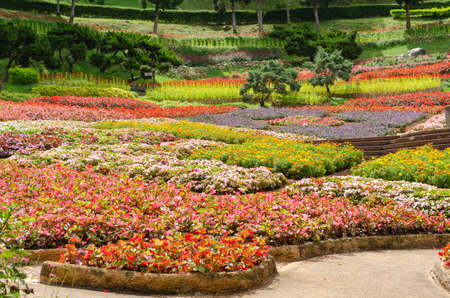 Colorful of blooming flowers garden at Mae Fah Luang Garden in Chiang Rai,Thailand