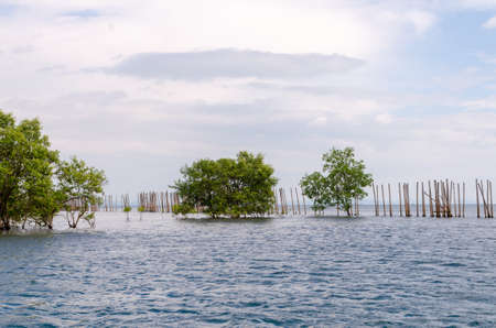 Mangrove landscape extending to the sea