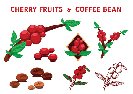 cheery fruits and coffee beans vector illustration
