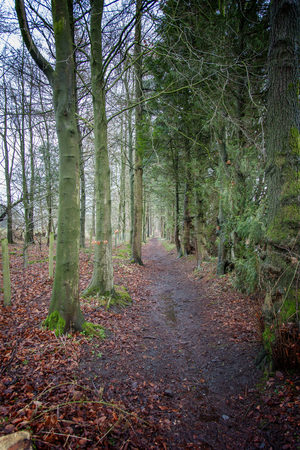 a damp woodland path, bare decidious trees to the left evergreens to the right and the remains of the fallen leaves of autumn either side of the path Imagens