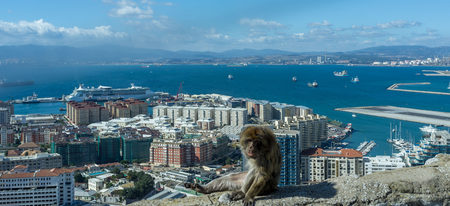 a view of the port and sea from the rock of Gibraltar with a barbary ape in the forground