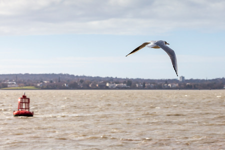 mersey: a seagull flies over the mersey estuary Stock Photo