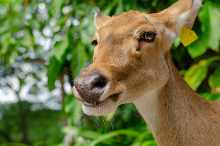 Close up Roe deer Smily in a field Reklamní fotografie - 121007464