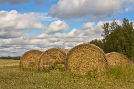 Hay bales in a field with a blue cloudy sky and trees.