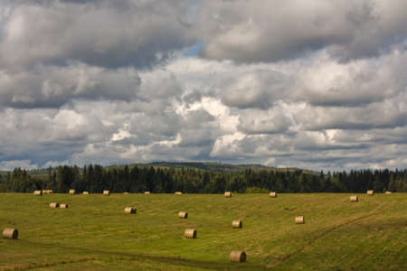 Landscape of hay bales at harvest with a stormy sky.