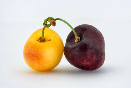 Yellow cherry and red cherry tied together Stock Photo