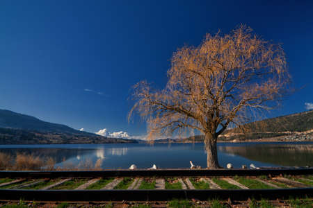 Willow tree on Wood Lake with train tracks in the foreground. Stock Photo - 15157124