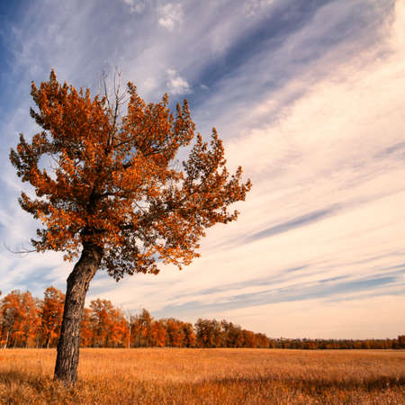 Lone tree in the grasslands with an Autumn Sky Stock Photo - 15289791