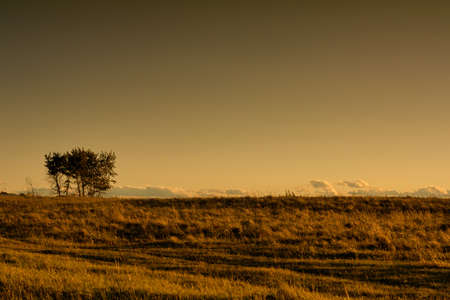 Landscape of lone tree at dusk in the warm grasslands  Stock Photo