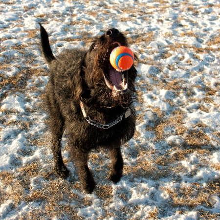 Dog catching orange ball Stock Photo