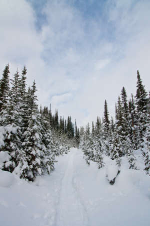 A freshly snow covered trail in the forest