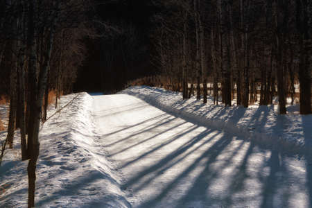 A winter walk on a shadowy tree lined pathway