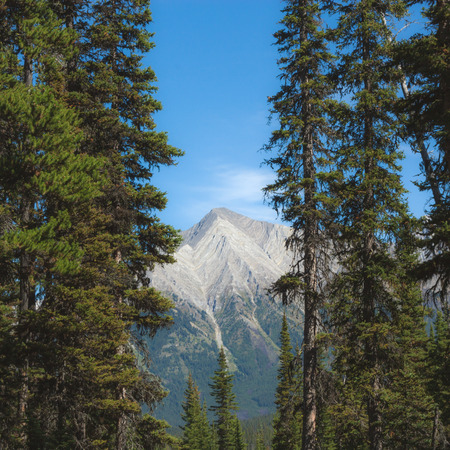 rockies: Mountain peak in the Canadian rockies framed by trees. Stock Photo