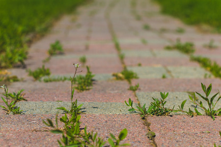 Low point of view of a brick path with weeds.