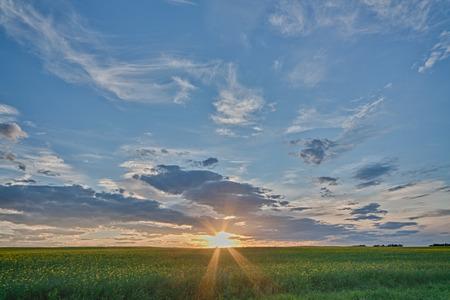 Sunburst as the sun sets over a canola field in Alberta, Canada.