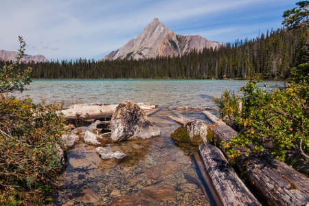 Landscape of Watridge Lake with deadwood in the foreground and Mount Shark in the background.