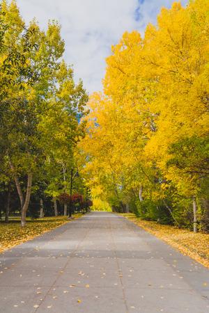 Pathway in Princes Island Park, Calgary in autumn. Stock Photo