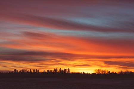 Landscape of a fiery tree line sunset.