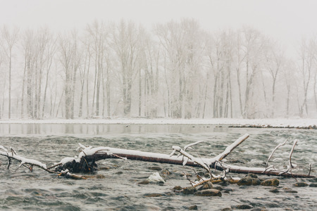 deadwood: Landscape of a winter snow storm along the Bow River.  Trees visible through the snow in the distance and deadwood in the foreground. Stock Photo