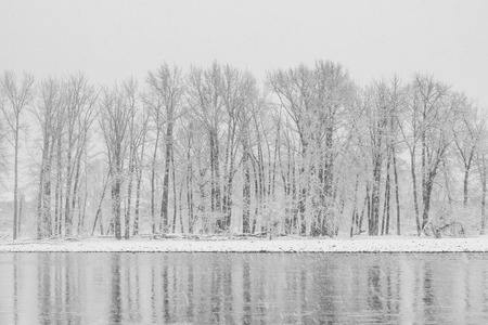 Icy trees in snow storm reflecting in the Bow River. Banque d'images