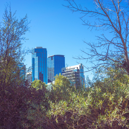 highrises: Cityscape of blue buildings in Calgary, Alberta framed by trees. Stock Photo