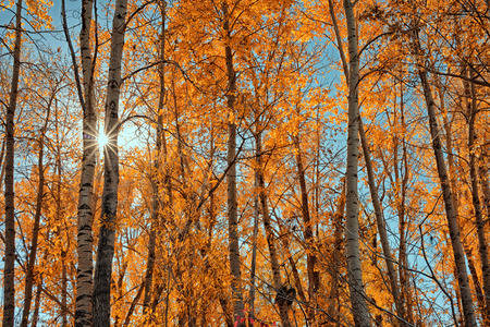 sunny: A starlike sunburst through a grove of autumn trees. Stock Photo