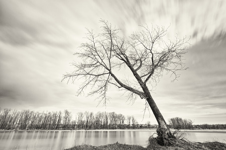 Long exposure landscape of a tree leaning off the bank of the Bow River, Alberta, Canada. Banque d'images