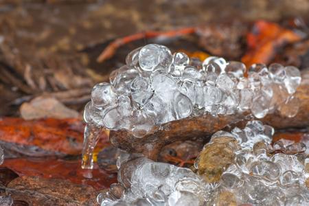 deadwood: Macro of frozen water drops on a piece of deadwood in a stream.