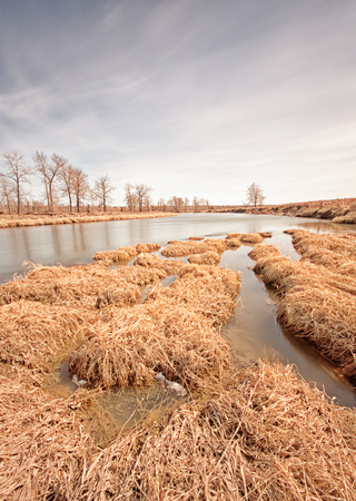 Long exposure landscape of textured grass in the Bow River, Alberta, Canada.