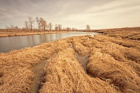 Golden textured grass along the Bow River, Alberta Canada Stock Photo