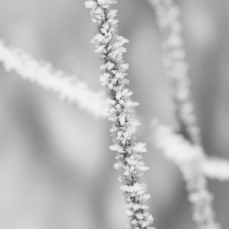 Monochrome macro of hoar frost on the wire of a fence with background bokeh. Stock Photo