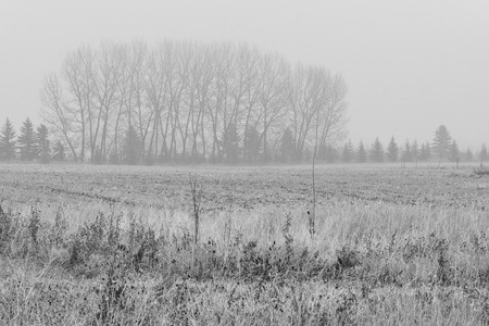 Monochrome landscape of trees in the Mist on a rainy day.