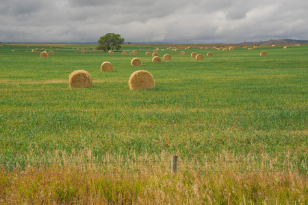 Prairie Landscape of hay bales in green grass with a fence in foreground. Stock Photo